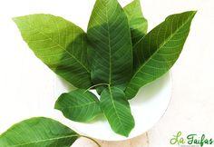 Frunzele de nuc au proprietăți diuretice, antiseptice și hipoglicemiante. Sunt recomandat în curele de slăbire, datorită conținutului de acid clorogenic