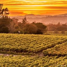 I love how clear days along the Sonoma Coast of California can turn into a few golden clouds that light up the sky casting a golden glow in the vineyards & surrounding landscape. There are few moments in time that surpass the simple beauty seen right here and at this moment. Good night from Wine Country!#bns_sky #bns_nature #bayareabuzz #caliexplored #country_features #clouds_of_our_world #everything_imaginable #fpog #great_captures_nature #heart_imprint #ig_serenity #ig_countryside…