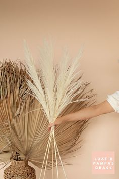 Luxe B Pampas Grass is currently the leading online marketplace for Pampas Grass.We carry a large variety of Pampas types in natural colour, bleach white, pink and other mesmerizing colors. Perfect for your home decor, any event especially boho wedding decor. Currently we ship anywhere in the US and Canada. @luxebpampasgrasswww.luxebpampasgrass.com#pampasgrass #driedpampas #luxebpampasgrass #driedpampasgrass #driedflowers #bohowedding Boho Wedding Decorations, Pampas Grass, Live Plants, Blow Dry, Dried Flowers, Bud, Bleach, Dandelion, Type