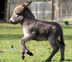 This donkey is so beautiful In every way!!.  I had two donkeys, and their names was Bugs and Bunny. Bugs was the boy and Bunny was a girl. Well Bunny got pregnant and in the process she died. R.I.P                                     Bunny