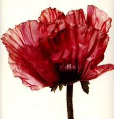 Flowers-by-Irving-Penn-25