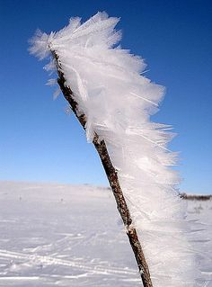 Wind and water can build up ice feathers