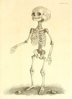 Plate XXIX. Anatomy of a fetus, near birth. A series of engravings, representing the bones of the human skeleton. 1819.