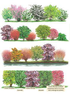 Creative Landscape, Plant Identification, Flowering Shrubs, Plantation, Plant Care, Permaculture, Abandoned Places, Landscape Architecture, Animation