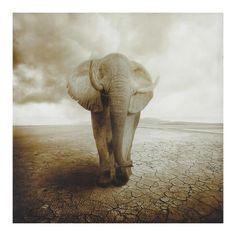 Lienzo elefante 120 x 120cm TERRE D'AFRIQUE