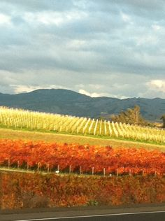 Taken with my Iphone out the window Driving into Napa wine country as we were driving about 60 mph.  Best pic of the trip.