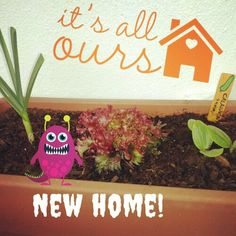 Trasplantar a una nueva casa. Move up to a new pot.   #urbangarden #veggies #igersmadrid #urbangardenersrepublic #growyourown #gardening #greenthumb #seeds #raisedbed #sprout #huertourbano #huerto #horticulture #semilleros #brote #semilla #homegrown #gogreen #Madrid #soil #maceta #horturba #balconygarden #balcony #growwhatyoueat