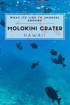 We took a very early morning tour out to Molokini crater from Wailea, Maui. Here's why it was awesome.