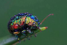 rainbow beetle..the Goddess at work with her paint brush..gorgeous..