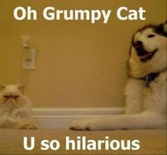 Grumpy Cat Pictures With Captions | Grumpy Cat | The Funny Pics Page