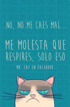 No, me caes mal... Me molesta que respires, solo eso #Cat #Gato #Mr.cat