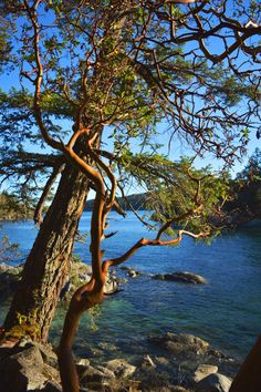 A weekend getaway in Sechelt, BC. Smugglers Cove, prosecco, sunsets, arbutus trees, what more could you want? Beautiful British Columbia coast at it's best.