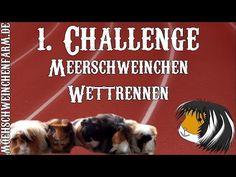 1. Meerschweinchen Challenge: Minigolf- Wettrennen - YouTube