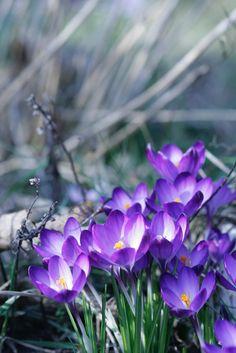 Gartentipps, Wie Euren Kübelpflanzen Ein Guter Start In Die ... Fruhjahrsputz Garten Tipps Gartensaison