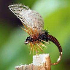 Quill Wally winged emerger-ish sz14. #flugfiske #flugbindning #flytyingporn #flyfishingaddict #flytyingjunkie #fishing #harelinedubbin #flyfishingjunkie #flylife #fishinglife #angler #whitingfarms #trout #browntrout #troutfishing #loonoutdoors #flytying #fishing #flyfishing #fluefiske #flyfishfood #troutfood #troutcandy #kamasan #macro #closeup #dryordie #torrfluga #flytyingart #flyart #flytyer