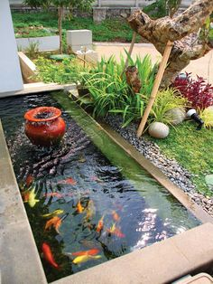 Selain menjadi 'rumah' bagi ikan-ikan yang cantik, suara gemericik air dari kolam dapat memberikan rileksasi bagi para penghuni rumah.