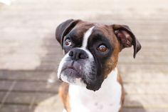 Is It Safe To Give Dogs & Cats The Same Medications And Doses?