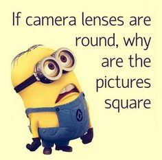 Best collection of funny minion quotes and images. Despicable me cute minion pictures with captions. Funny Minion Pictures, Funny Minion Memes, Funny Disney Jokes, Minions Quotes, Fun Jokes, Minions Images, Minions Pics, Hilarious Pictures, Funny Images