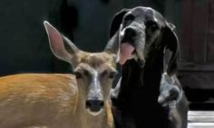 Dog & Deer Are Best Friends (Video)