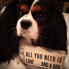 All you need is love...and a dog  ❤️ Greta knows best :-)