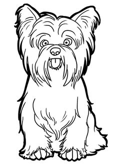 how to draw a black and white shih tzu wikihow
