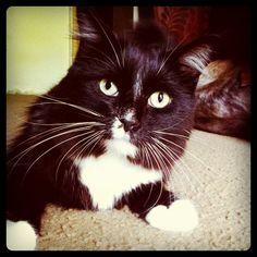 \\\ #cat #tux #mordecai \\\