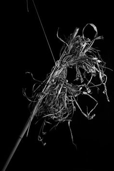 Yard Scraps No. 1 #fineart #bw #stilllife #photography More at http://joshcampbellphoto.com/blog/ Source: http://fineartamerica.com/featured/yard-scraps-no-1-josh-campbell.html