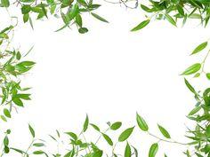 leaf border images - Google Search