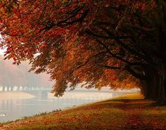 Autumn in Cologne, Germany (by papierhexe)
