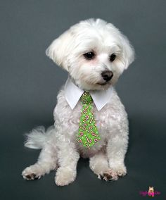 Christmas Candy Canes Doggie Shirt Collar and Tie. Choose a neck tie or a bow tie. ADORABLE!!! Sizes XS - XL