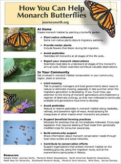 Journey North citizen scientists track monarch butterfly migration each fall and spring as monarch butterflies migrate to and from Mexico. Report your own observations of migrating monarch butterflies to real-time migration maps. Monarch Butterfly Habitat, Monarch Butterfly Migration, Butterfly Plants, Butterfly Drawing, Butterfly Information, Hummingbird Plants, Birds And The Bees, Beautiful Butterflies, Native Plants