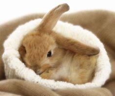 Resultado de imagen de cute little rabbit