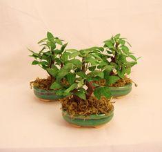 Bonsai com Árvore artificial ,vaso terracota de cerâmica, musgos. Lindo para seu Lavabo! R$ 37,90