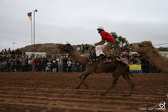 The Lions Imparja Camel Cup is a race like no other.  Come along to watch the race and have a good laugh (guaranteed that no two races are the same), plus there's plenty of entertainment and interaction between races, with lots of great local stalls. 14 July