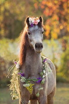 El caballo lleva ropa? No es ropa exactamente. Lleva muchas flores. De qué color son las flores.