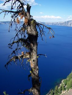 crater lake, oregon and yes, the water is just that blue on a clear day. breath taking sight.