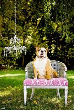 Dudley the Bulldog on a upcycled Booth 121 rental chair.