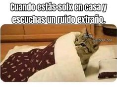 Gatos Cool, Cats, Animals, Instagram, Gatos, Animales, Animaux, Animal, Cat