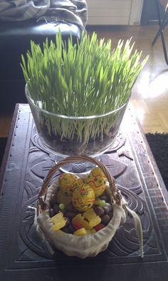 Pääsiäisruoho korkeaan lasimaljaan