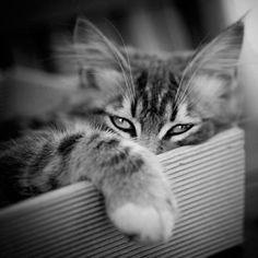 6fe5edf6a 30 melhores imagens de retrô   Gatito, Amo a los gatos e Amor de gato