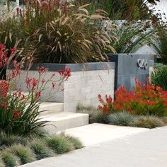 Contemporary Succulent Garden Design, Pictures, Remodel, Decor and Ideas - page 13