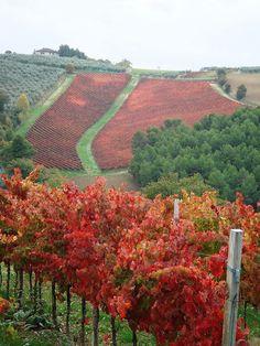 Amazing Fall Vineyard, Le Vigne Rosse del Sagrantino #taninotanino #vinosmaximum