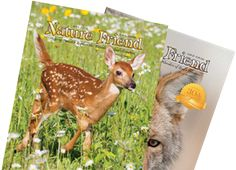 Nature Friend Magazine  Each month since 1983, Nature Friend magazine has been helping families explore the wonders of God's creation.
