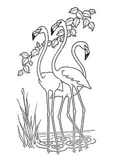 Flamingo Coloring Pages Flamingos Flamingo Coloring