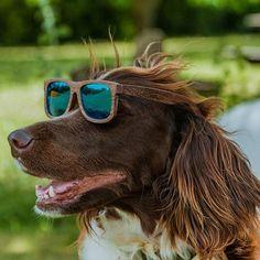Auch unserer Brixi steht Ceres ausgezeichnet  @wicked_design.at  #sonnenbrille #sommer #holz #woodisgood #wickedwood #wicked-design #natur #wanderlust #tribaldesign #österreich #wooddesign #woodenart #sommerzeit #naturliebhaber #surferstyle #fashiondesign #holzliebe #igersaustria #austrianbrand  #designedinaustria #accessoires #handcrafted #dogslife #sonne #wickedsonnenbrillen #nussholz #tribal #woodart #hubdefreude Wicked, Tribal Designs, Wooden Sunglasses, Wanderlust, Fashion, Summer Time, Sun, Nature, Wood