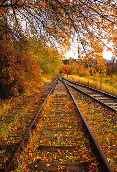 Train Tracks Photograph - Switching To Autumn by David Patterson Train Pictures, Fall Pictures, Nature Pictures, Photo Background Images, Photo Backgrounds, Railroad Photography, Nature Photography, Autumn Scenes, Autumn Aesthetic