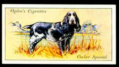 """Ogden's Cigarettes """"Dogs"""" (set of 50 issued in Cocker Spaniel Dog Artwork, Birds Of America, Collector Cards, Game Birds, Vintage Dog, Wild Dogs, Old Postcards, Animals Of The World, Dog Quotes"""