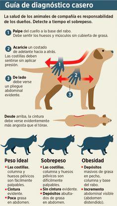 Como saber si nuestra mascota tiene sobrepeso