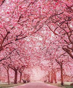 Pink christmas tree wallpaper iphone cherry blossom elegant new best trees ideas on of wallpape . pink and green palm tree wallpaper cherry blossom Garden Types, Beautiful World, Beautiful Places, Wonderful Places, Beautiful Scenery, Stunning View, Beautiful People, Frühling Wallpaper, Pink Blossom Tree