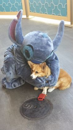 Corgi and Stitch. I wasn't sure if it should be pinned to my disney board or the corgi board. Cute Funny Animals, Cute Baby Animals, Animals And Pets, Mini Corgi, Corgi Dog, Cute Puppies, Cute Dogs, T 62, Animal Pictures